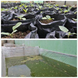 greenhouse dan bioflok bkad kebasen banyumas