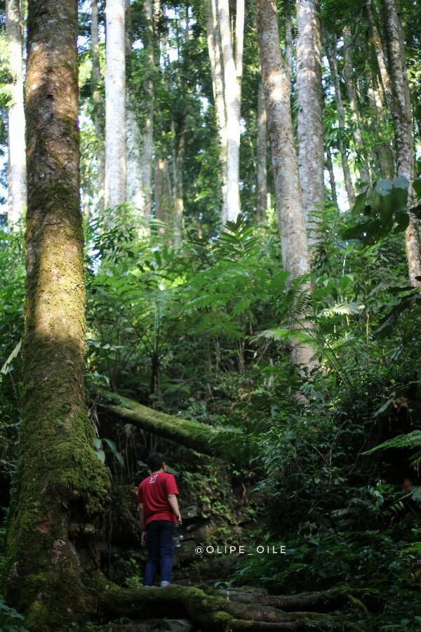 blogger trekking-hutan-baturraden